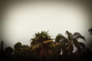 cm_trees