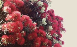 venice_flowers