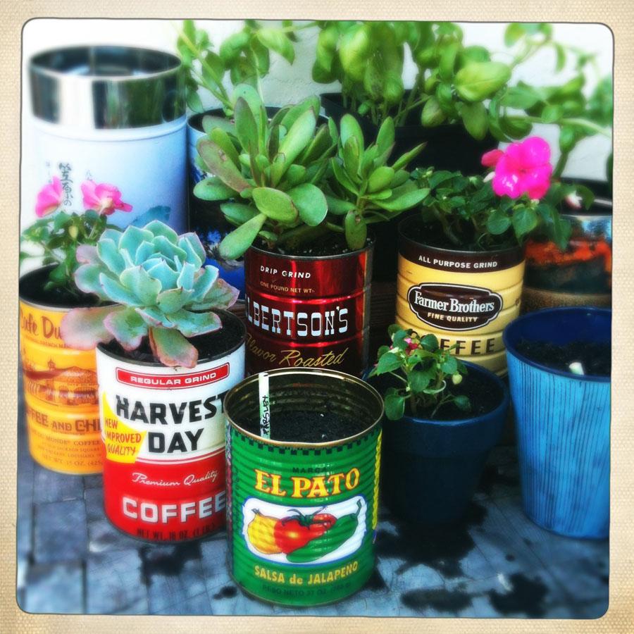 My Coffee Tin Garden