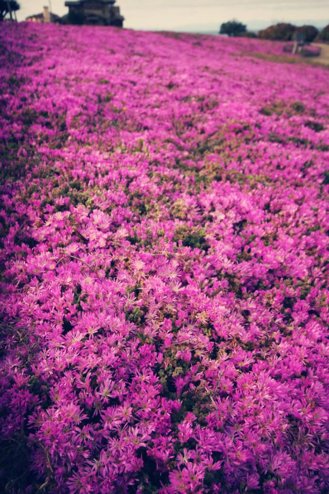 blog-flower_8090