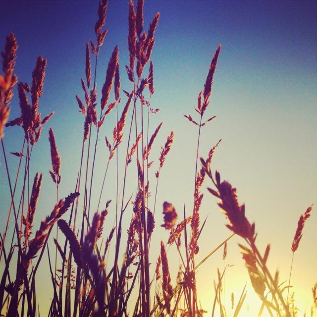 blog-dillon-9