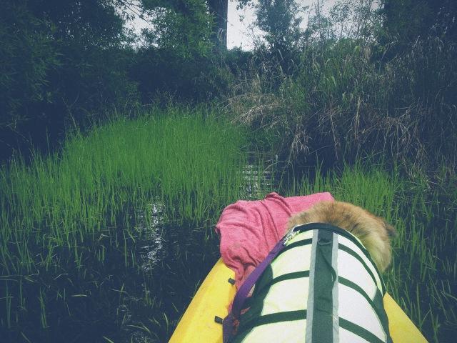 kayak_15