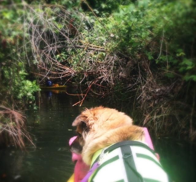 kayak_9