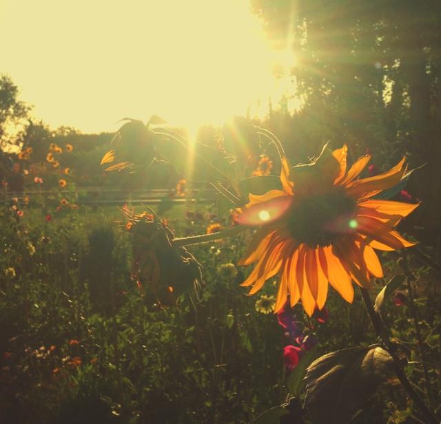 wildflowers67