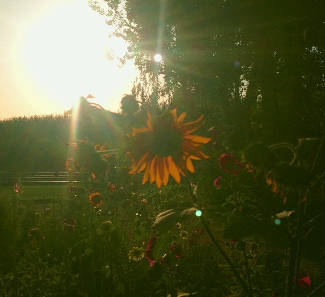 wildflowers_0470