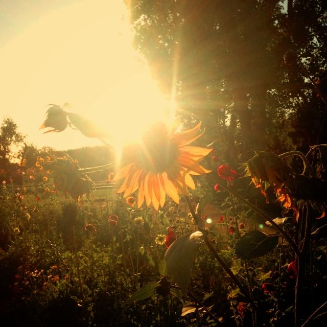 wildflowers_0472
