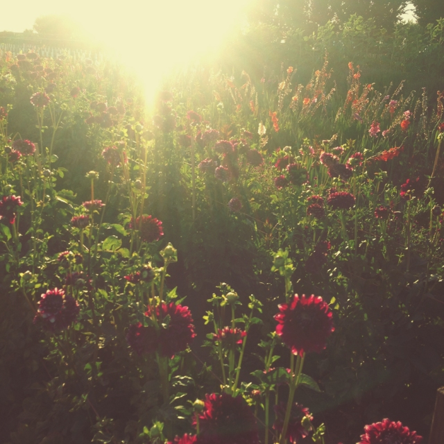 wildflowers_0475