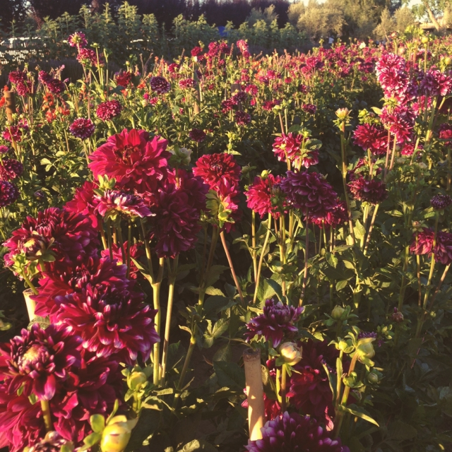 wildflowers_0484