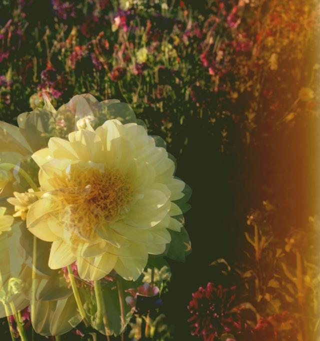wildflowers_0486