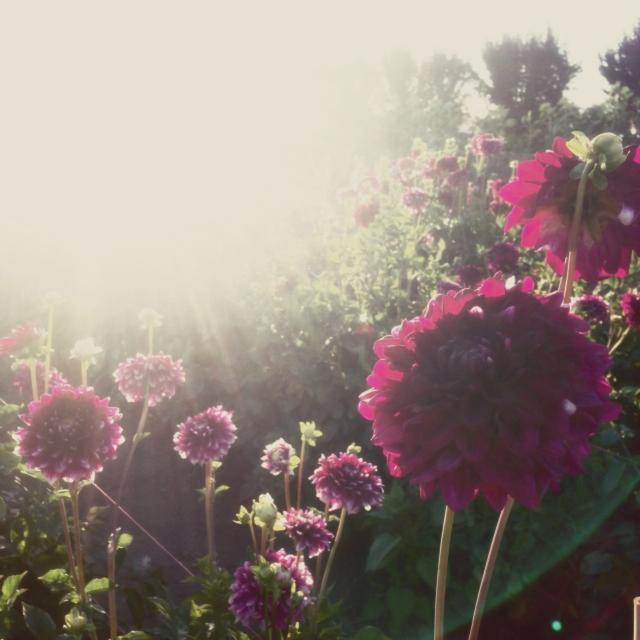 wildflowers_0489