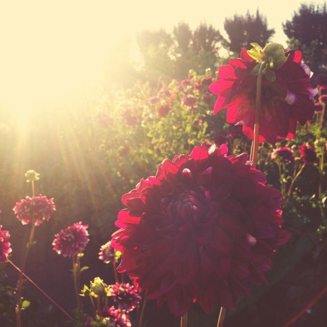 wildflowers_0490
