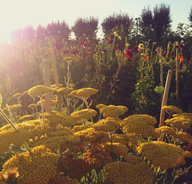 wildflowers_0493