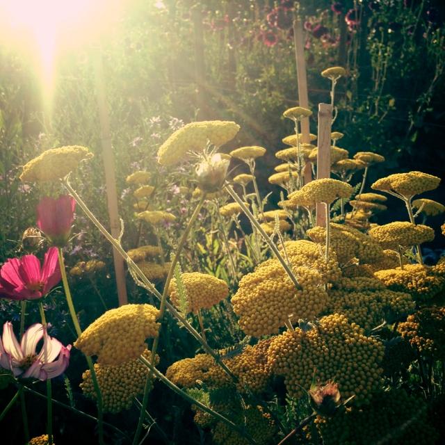 wildflowers_0495