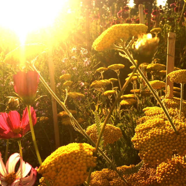 wildflowers_0497