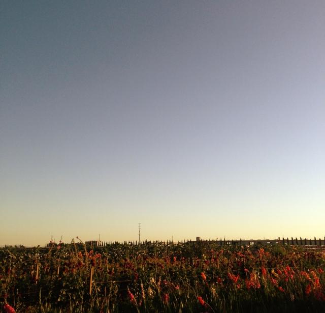 wildflowers_0500