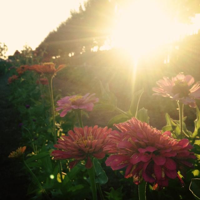 wildflowers_0502