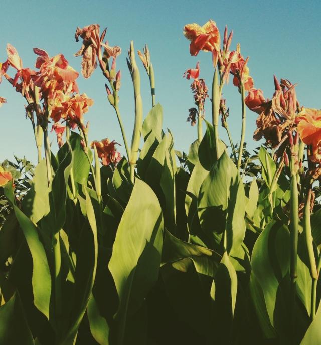 wildflowers_0516