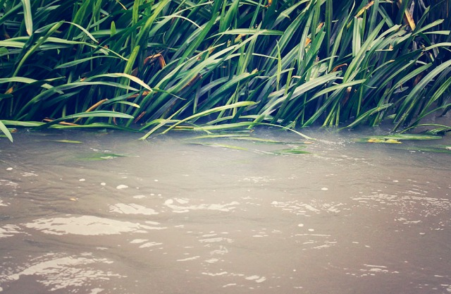 river_7629